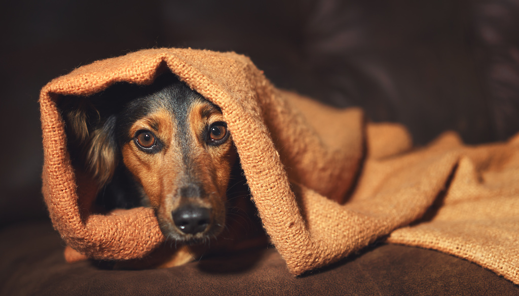 Can I Give My Dog Benadryl to Calm Him Down? - Rehome by