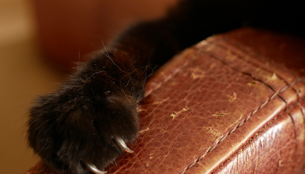How Do You Stop Cats From Scratching Furniture Rehome By Adopt A