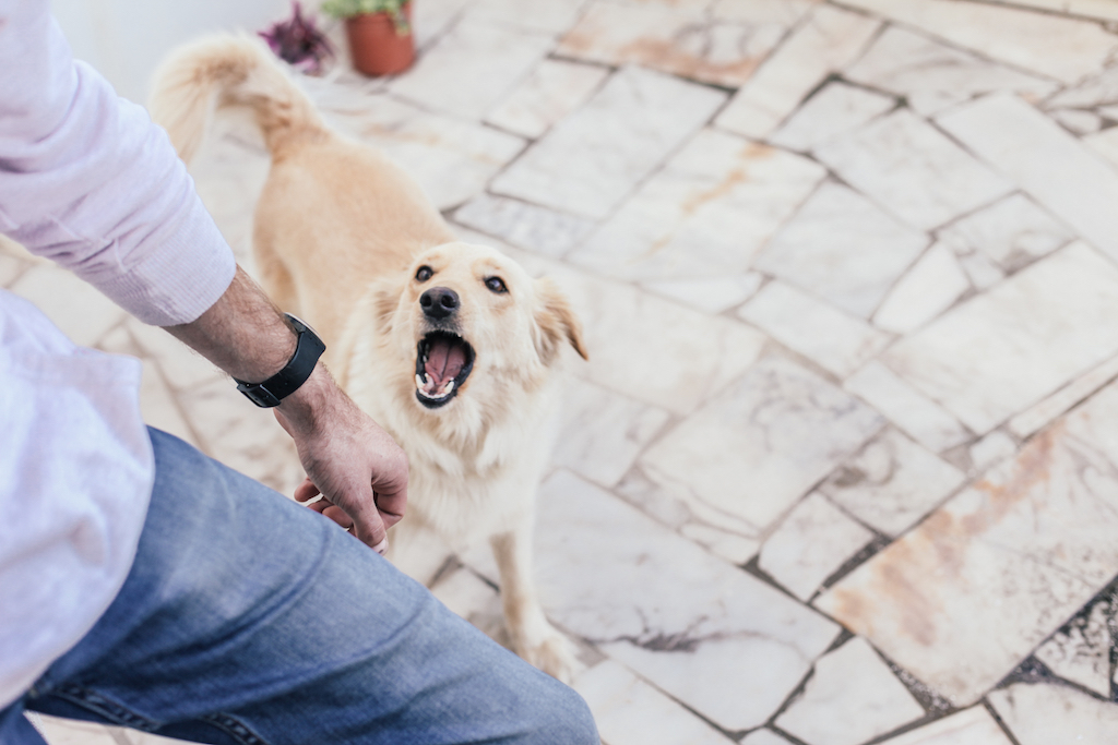 Can A Landlord Make You Get Rid Of Your Dog? - Rehome by